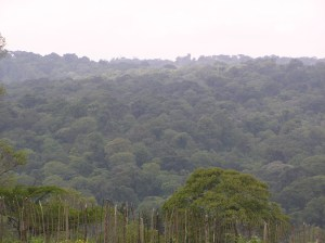 Several tropical rain-forests in developing countries are at risk of being cut down to pave way for new developments
