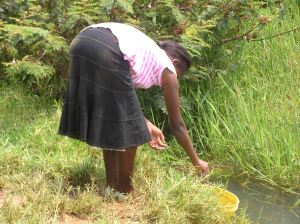 A woman draws water from Yala swamp in Kenya