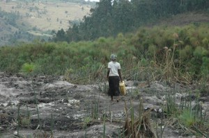 A woman with a Jerry Can struggling to locate where to fetch water from in the degraded Kikondera wetland in Buhweju district of Uganda. Picture by Chris Mugasha