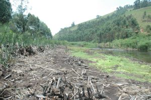 Orusindura wetland destruction