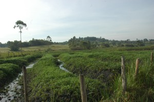 A wetland that has been encroached on in Western Uganda
