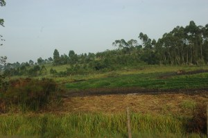 The ministry's move is to ban such activities of establishing gardens of crops in wetlands.