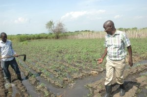 Sylvester Mudosi (right) a farmer looks  at an irrigation system supplying water to his garden. His farm is in Mubuku  in Kasese district.
