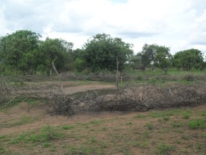 A water point in Kitgum guarded with dry branches of trees to prevent animals from access it