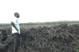 A man stands on top of roots for a destroyed wetland