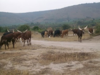 Climate change as a result of global warming continues to cause havoc in various parts of the world, drying up farmlands that livestock used to depend on.