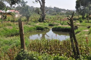 Most Ugandans get their water directly from swamps, streams, gravity flow schemes and springs and wells. Such water may contain worms, protozoa, bacteria and viruses that, if consumed, can cause hepatitis, typhoid, cholera and diarrhea.
