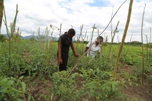 Chikupila's tomato garden