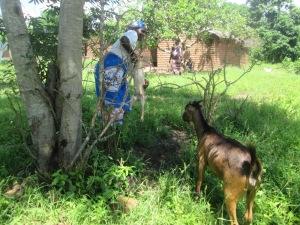 One of the livestock farmers in Chigodi