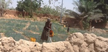 Woman watering her onions farm along the Bolgatanga – Bawku road in Ghana(By Ama Kudom-Agyemang)