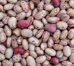Beans remain a staple in the African diet