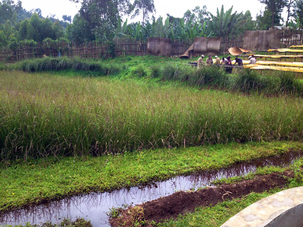 Wetlands serve a variety of important ecological functions including recharging groundwater supplies and trapping floodwaters